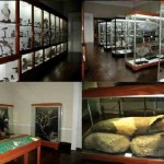El Museo de Historia Natural de Funchal