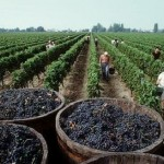 Burdeos, la región vitivinícola de Francia