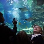 Conozca el Acuario Sea Life de Londres