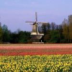 Festival de Flores en Holanda : Keukenhof
