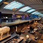 El Museo de Ciencias Naturales de Bruselas