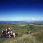 Paseos a caballo en Peak District