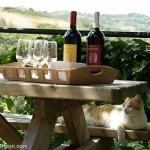 Festival del Vino en Piamonte
