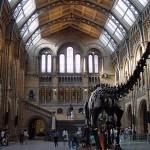 Conozca el Museo de Historia Natural de Londres
