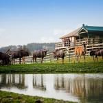 Viajes de Safari en Inglaterra