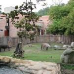 Visita el Zoológico de Praga