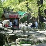 Un paseo al Zoológico de Berlín