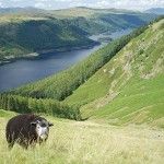 Descubra el Parque Nacional Lake District en Cumbria