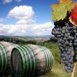 La ruta del vino en Campania