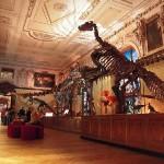 Burdeos : una visita al Museo de Historia Natural