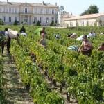 Burdeos, la ciudad del vino