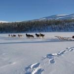 Excursiones de invierno en Suecia : Parque Nacional Tresticklan